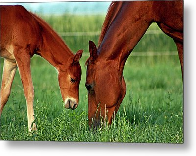 Mother And Foal 3377 H_2 Metal Print