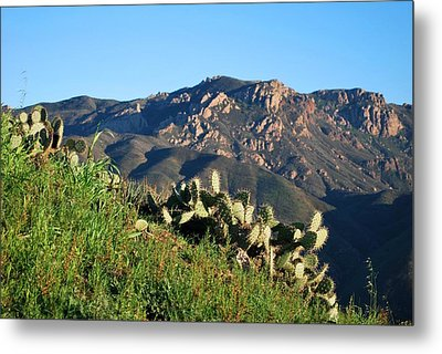 Metal Print featuring the photograph Mountain Cactus View - Santa Monica Mountains by Matt Harang