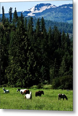 Mountain Herd Metal Print