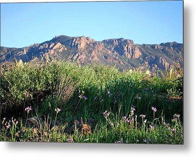 Metal Print featuring the photograph Mountain Landscape View - Purple Flowers by Matt Harang