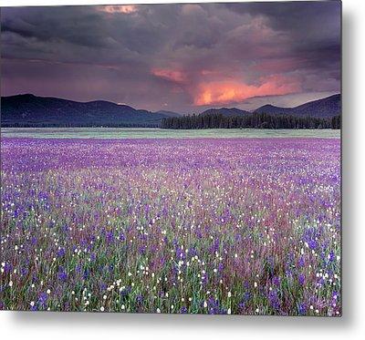 Mountain Meadow Purple Metal Print by Leland D Howard
