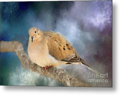 Metal Print featuring the photograph Mourning Dove Of Winter by Darren Fisher