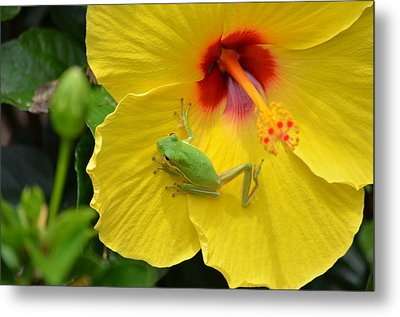 Movin On Metal Print by Kathy Gibbons