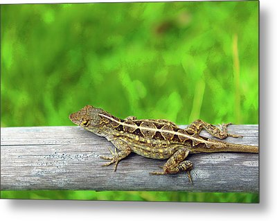 Mr. Lizard Metal Print