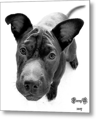 Ms. Raisin Metal Print