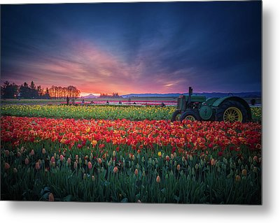 Metal Print featuring the photograph Mt. Hood And Tulip Field At Dawn by William Lee