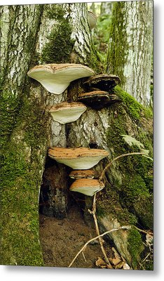 Mushroom Village Metal Print by James Steele
