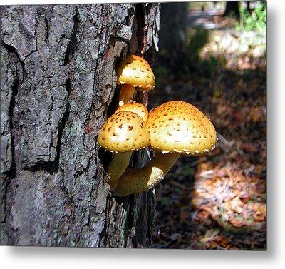 Mushrooms On A Tree Metal Print by George Jones