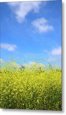 Mustard Beauty Metal Print by Timothy OLeary