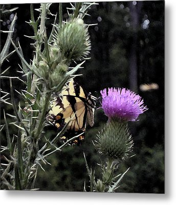 Mutual Attraction Metal Print by Kathleen Holley