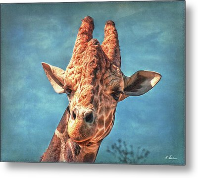 Metal Print featuring the photograph My Name Is Bingwa by Hanny Heim