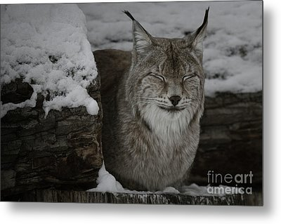Metal Print featuring the photograph My Robert Bateman by Brad Allen Fine Art