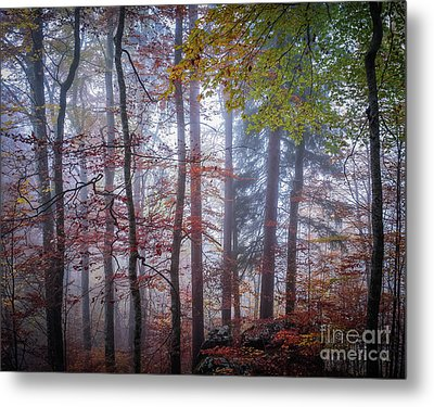 Metal Print featuring the photograph Mystery In Fog by Elena Elisseeva