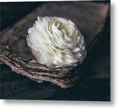 Metal Print featuring the photograph Mystique by Kim Hojnacki
