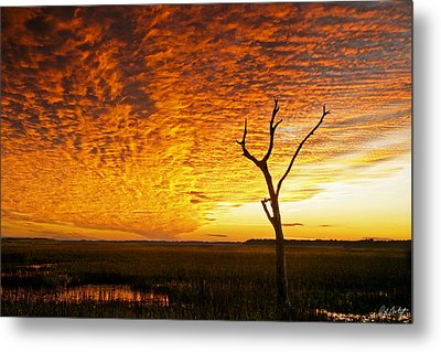 Naked Tree Metal Print by Phill Doherty