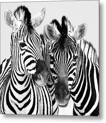 Namibia Zebras Iv Metal Print by Nina Papiorek