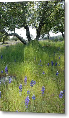 Napa Hills Meadow Metal Print by Dallas Hyatt