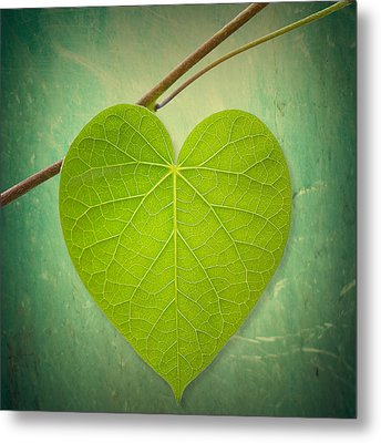 Metal Print featuring the photograph Nature Lover by Philippe Sainte-Laudy