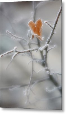 Metal Print featuring the photograph Nature's Valentine by Diane Alexander