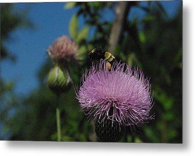 Nector Collector Metal Print by Robyn Stacey