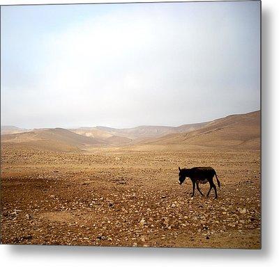 Negev Donkey Metal Print by Rachel Figueroa