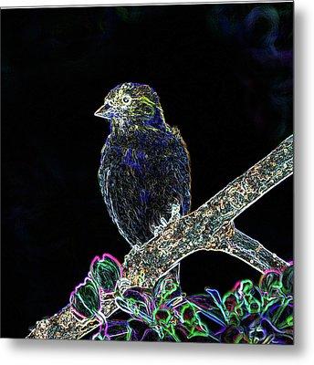 Neon Goldfinch Metal Print by Betty LaRue