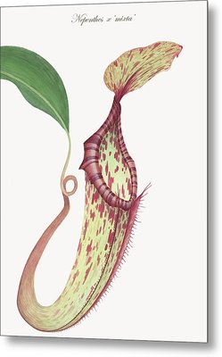 Nepenthes X 'mixta' Metal Print by Scott Bennett