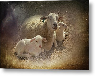 New Baby Lambs Metal Print by Lena Wilhite