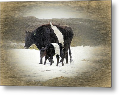 New Life In A Winter Snowfall Metal Print by Donna Kennedy