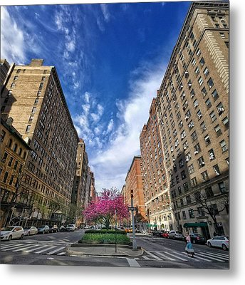 New York Park Ave. Cherry Blossoms Metal Print
