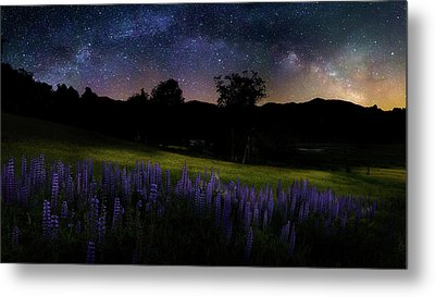 Metal Print featuring the photograph Night Flowers by Bill Wakeley