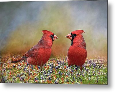 Metal Print featuring the photograph Northern Cardinals In Sea Of Flowers by Bonnie Barry