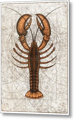 Northern Lobster Metal Print