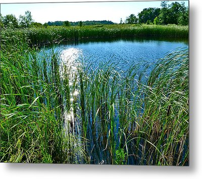 Northern Ontario 2 Metal Print by Claire Bull