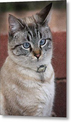 Not Impressed  Metal Print by Kim Henderson