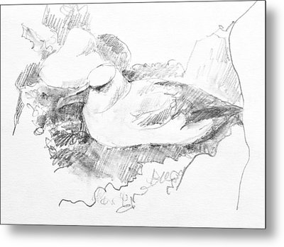 New Zealand White-capped Mollymawk Metal Print