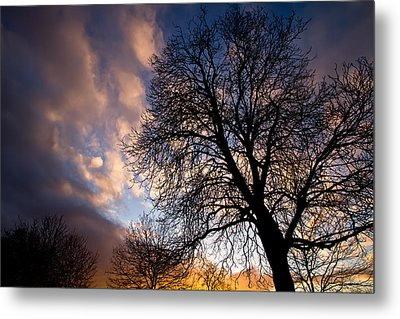Oak Against The Sky Metal Print by Justin Albrecht