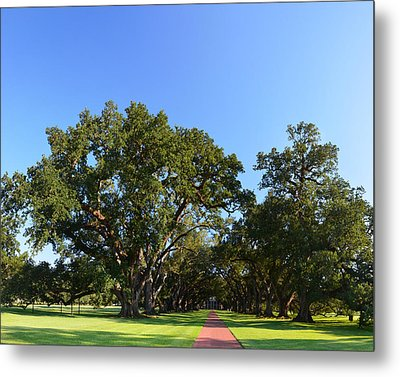 Oak Alley Plantation Panoramic Metal Print by Maggy Marsh