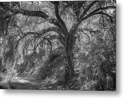 Metal Print featuring the photograph Oak And Trail by Alexander Kunz
