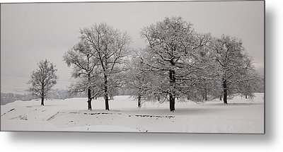 Oaks In Winter Metal Print by Gabriela Insuratelu
