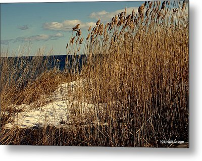 Ocean View Through The Grasses Metal Print by Lois Lepisto