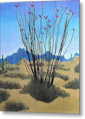 Ocotillo Metal Print by Bernard Goodman