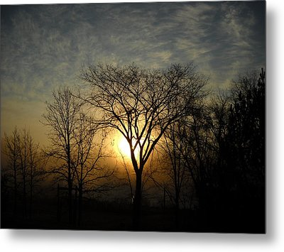 October Sunrise Behind Elm Tree Metal Print