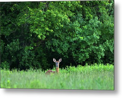Metal Print featuring the photograph Oh Deer by Juergen Roth
