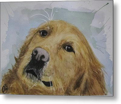 Old Golden Retriver Metal Print by Annie Poitras