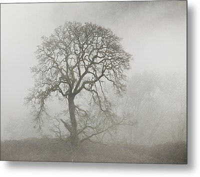 Metal Print featuring the photograph Old Oak Tree And Fog by Angie Vogel