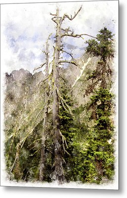Old Pines Cascades Wc Metal Print by Peter J Sucy