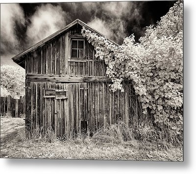 Old Shed In Sepia Metal Print by Greg Nyquist