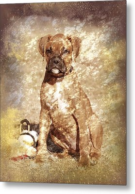 Old Time Boxer Portrait Metal Print