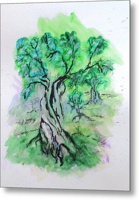 Olive Tree Grove Metal Print